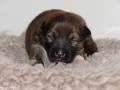 s Pup 5 Elja 13 dagen oud