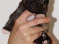 s Pup 2 Askur 2 weken oud (2)