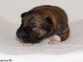 s Pup 5 Elja 2 weken oud (1)