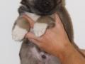 s Pup 4 Baldur 5 weken oud