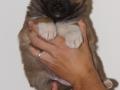 s Pup 5 Elja 5 weken oud